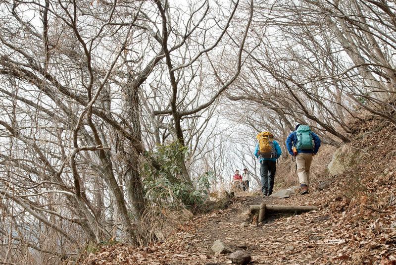 梅林を抜けると、樹林のなかの緩やかな登山道が続く。